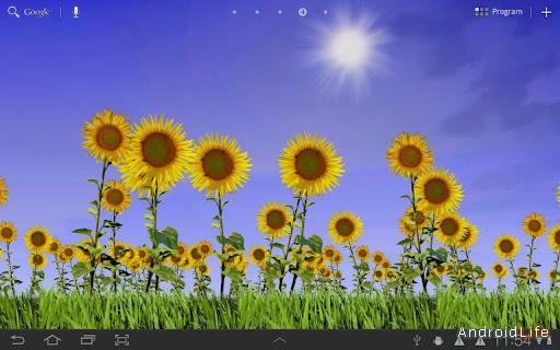 Sunflowers Live Wallpaper